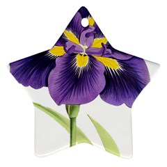 Lily Flower Plant Blossom Bloom Ornament (star)
