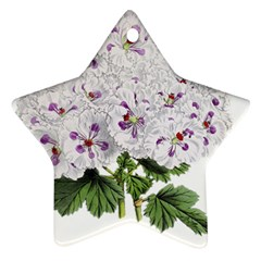 Flower Plant Blossom Bloom Vintage Ornament (star) by Nexatart