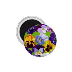 Spring Pansy Blossom Bloom Plant 1 75  Magnets