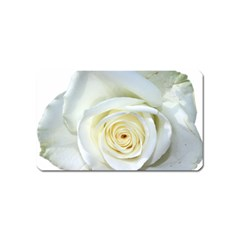 Flower White Rose Lying Magnet (name Card)