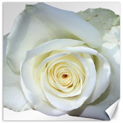 Flower White Rose Lying Canvas 12  X 12   by Nexatart