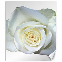 Flower White Rose Lying Canvas 20  X 24   by Nexatart