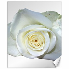 Flower White Rose Lying Canvas 11  X 14   by Nexatart