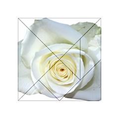 Flower White Rose Lying Acrylic Tangram Puzzle (4  X 4 ) by Nexatart