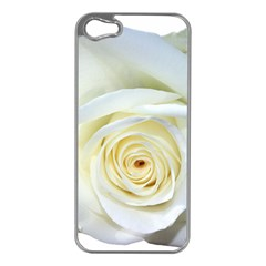 Flower White Rose Lying Apple Iphone 5 Case (silver) by Nexatart