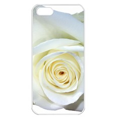 Flower White Rose Lying Apple Iphone 5 Seamless Case (white) by Nexatart