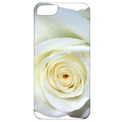Flower White Rose Lying Apple Iphone 5 Classic Hardshell Case by Nexatart