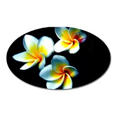 Flowers Black White Bunch Floral Oval Magnet