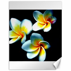 Flowers Black White Bunch Floral Canvas 12  X 16   by Nexatart