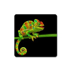 Chameleons Square Magnet by Valentinaart