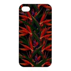 Bird Of Paradise Apple Iphone 4/4s Premium Hardshell Case by Valentinaart