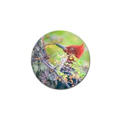 Woodpecker At Forest Pecking Tree, Patagonia, Argentina Golf Ball Marker (4 Pack) by dflcprints