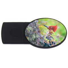 Woodpecker At Forest Pecking Tree, Patagonia, Argentina Usb Flash Drive Oval (2 Gb) by dflcprints