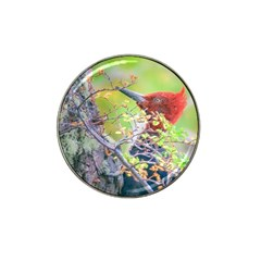 Woodpecker At Forest Pecking Tree, Patagonia, Argentina Hat Clip Ball Marker by dflcprints