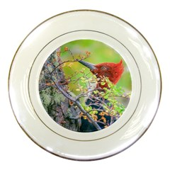 Woodpecker At Forest Pecking Tree, Patagonia, Argentina Porcelain Plates by dflcprints