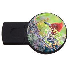 Woodpecker At Forest Pecking Tree, Patagonia, Argentina Usb Flash Drive Round (4 Gb) by dflcprints