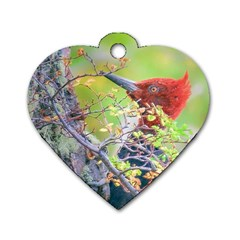Woodpecker At Forest Pecking Tree, Patagonia, Argentina Dog Tag Heart (two Sides) by dflcprints