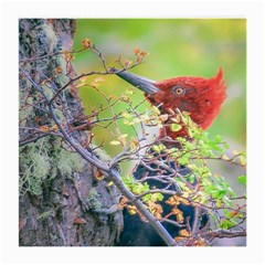 Woodpecker At Forest Pecking Tree, Patagonia, Argentina Medium Glasses Cloth by dflcprints
