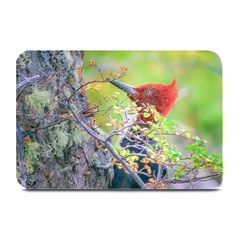 Woodpecker At Forest Pecking Tree, Patagonia, Argentina Plate Mats by dflcprints