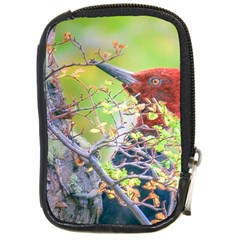 Woodpecker At Forest Pecking Tree, Patagonia, Argentina Compact Camera Cases by dflcprints