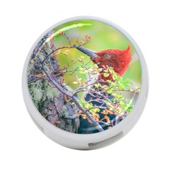 Woodpecker At Forest Pecking Tree, Patagonia, Argentina 4 Port Usb Hub (two Sides)  by dflcprints