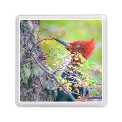 Woodpecker At Forest Pecking Tree, Patagonia, Argentina Memory Card Reader (square)  by dflcprints