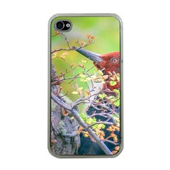 Woodpecker At Forest Pecking Tree, Patagonia, Argentina Apple Iphone 4 Case (clear) by dflcprints