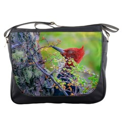 Woodpecker At Forest Pecking Tree, Patagonia, Argentina Messenger Bags by dflcprints