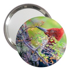 Woodpecker At Forest Pecking Tree, Patagonia, Argentina 3  Handbag Mirrors by dflcprints