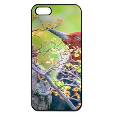 Woodpecker At Forest Pecking Tree, Patagonia, Argentina Apple Iphone 5 Seamless Case (black) by dflcprints