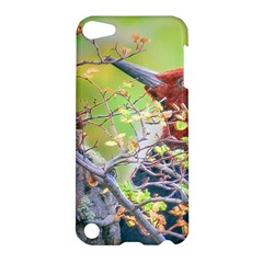 Woodpecker At Forest Pecking Tree, Patagonia, Argentina Apple Ipod Touch 5 Hardshell Case by dflcprints