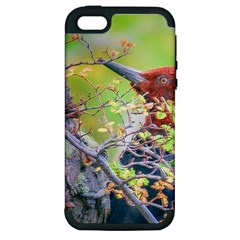 Woodpecker At Forest Pecking Tree, Patagonia, Argentina Apple Iphone 5 Hardshell Case (pc+silicone) by dflcprints