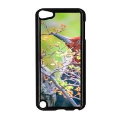 Woodpecker At Forest Pecking Tree, Patagonia, Argentina Apple Ipod Touch 5 Case (black) by dflcprints