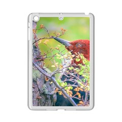 Woodpecker At Forest Pecking Tree, Patagonia, Argentina Ipad Mini 2 Enamel Coated Cases by dflcprints