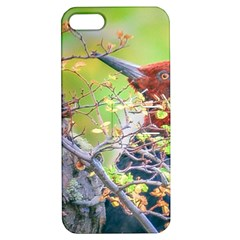 Woodpecker At Forest Pecking Tree, Patagonia, Argentina Apple Iphone 5 Hardshell Case With Stand by dflcprints
