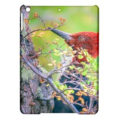 Woodpecker At Forest Pecking Tree, Patagonia, Argentina Ipad Air Hardshell Cases by dflcprints