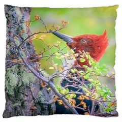 Woodpecker At Forest Pecking Tree, Patagonia, Argentina Large Flano Cushion Case (one Side) by dflcprints