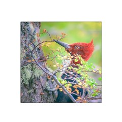 Woodpecker At Forest Pecking Tree, Patagonia, Argentina Satin Bandana Scarf by dflcprints