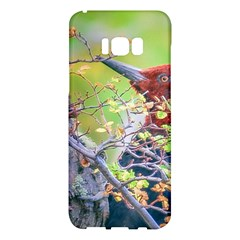 Woodpecker At Forest Pecking Tree, Patagonia, Argentina Samsung Galaxy S8 Plus Hardshell Case  by dflcprints