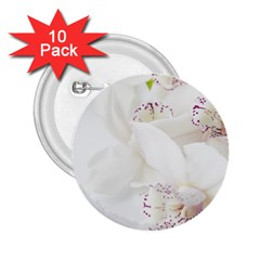 Orchids Flowers White Background 2 25  Buttons (10 Pack)  by Nexatart