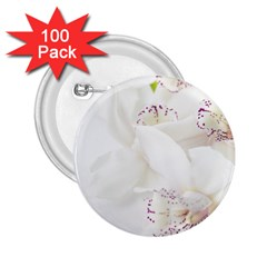 Orchids Flowers White Background 2 25  Buttons (100 Pack)  by Nexatart