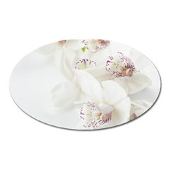 Orchids Flowers White Background Oval Magnet by Nexatart