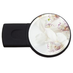 Orchids Flowers White Background Usb Flash Drive Round (2 Gb) by Nexatart