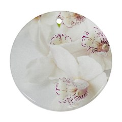 Orchids Flowers White Background Round Ornament (two Sides) by Nexatart