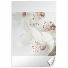 Orchids Flowers White Background Canvas 24  X 36  by Nexatart
