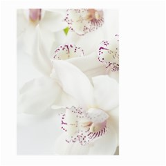 Orchids Flowers White Background Large Garden Flag (two Sides) by Nexatart