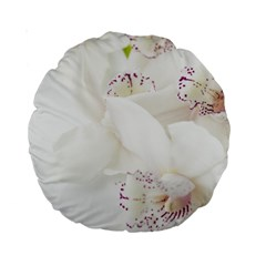 Orchids Flowers White Background Standard 15  Premium Round Cushions by Nexatart