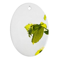 Leaves Nature Ornament (oval) by Nexatart