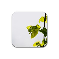 Leaves Nature Rubber Square Coaster (4 Pack)