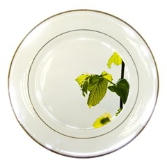 Leaves Nature Porcelain Plates by Nexatart